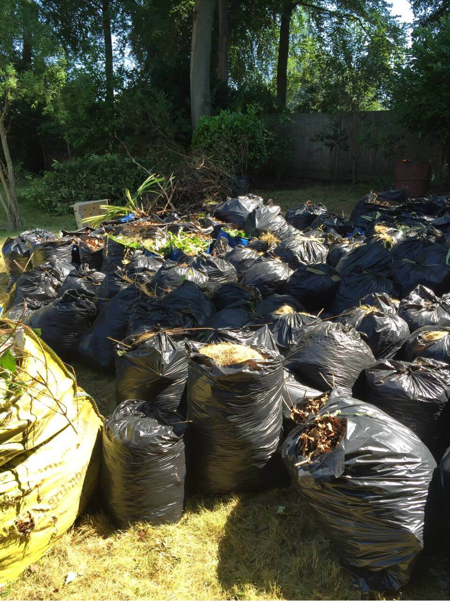 Newington Green rubbish clearance N16